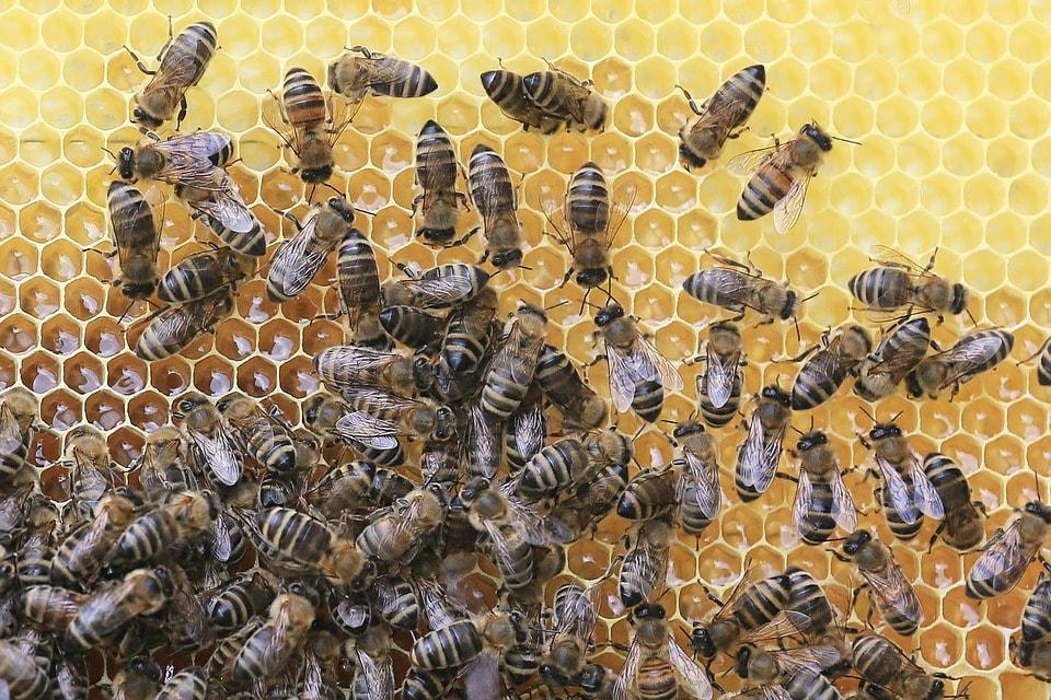 Méhpempő rendelés egyenesen a kaptárból jó áron
